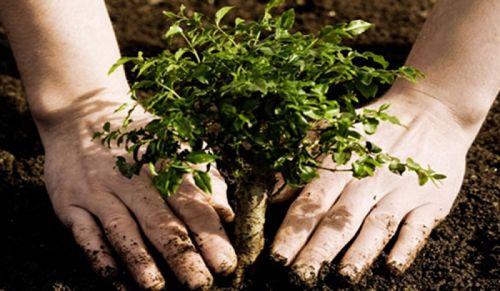 b_500_350_16777215_00_images_2014_ago_Desarrollo-Sustentable.jpg